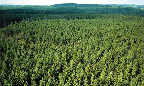 Forest biomaterial