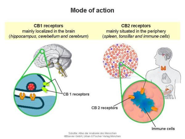 cannabinoid research resized 600