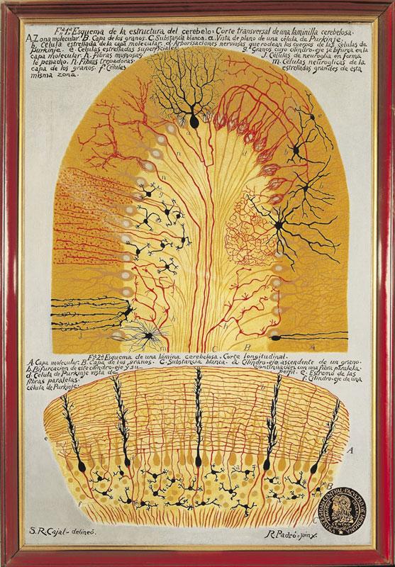 neural anatomy as art