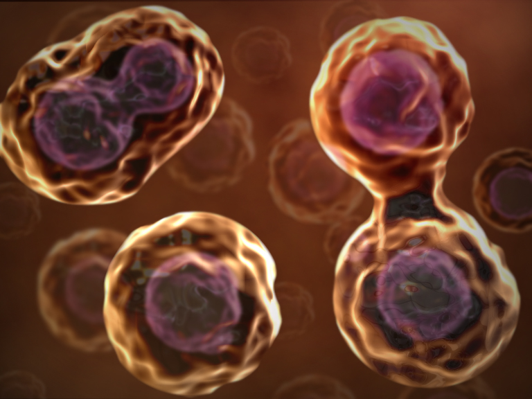 new stem cell therapy