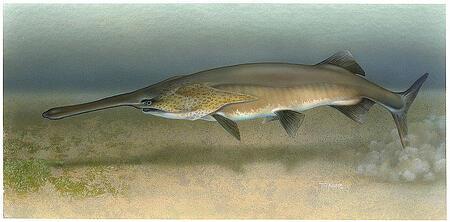 paddlefish bioresearch
