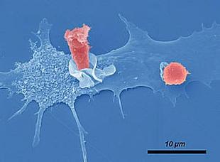 immune cells