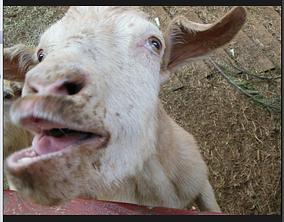 Cheap Vendor Shows Got your goat?