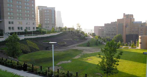 UPitt Campus