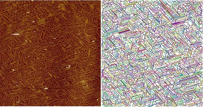 Life science researchers investigate collagen fractals
