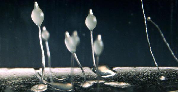 amoeba bioresearch
