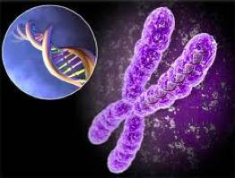 dna_chromosome