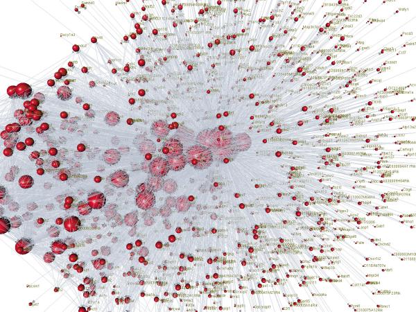 brain map resized 600