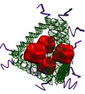 immunity bioresearch