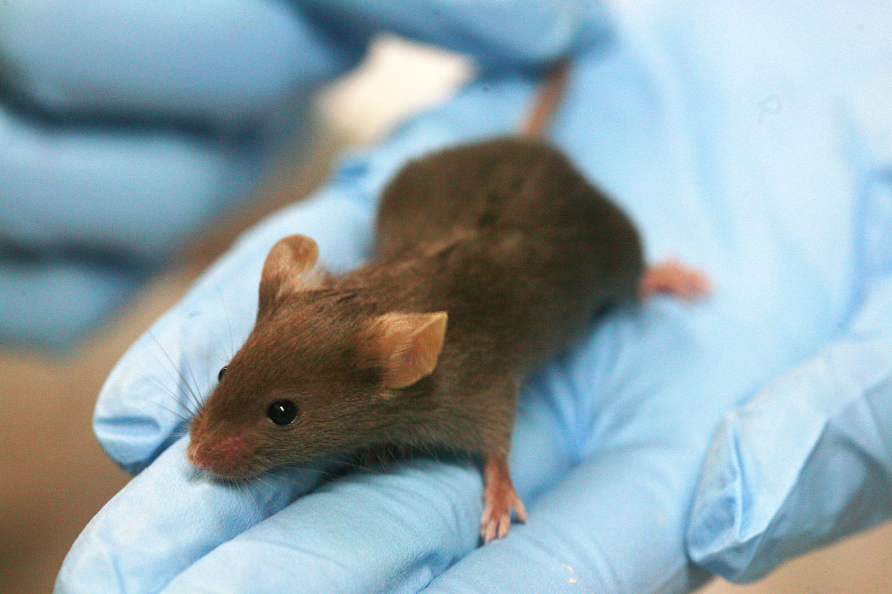Life science researchers in Houston found that AHCC could defeat HPV in mice.