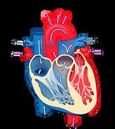 250px Heart diagram blood flow en svg