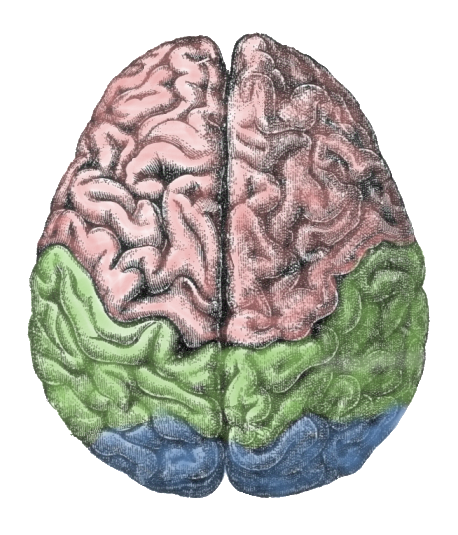 The $15 million award will help researchers study treatments for brain disorders.
