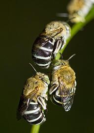 bee bioresearch