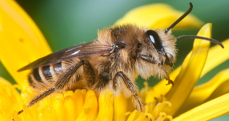 bee biotechnology