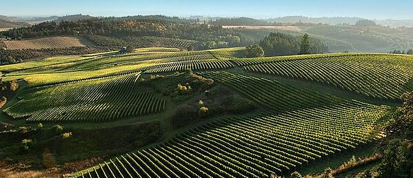 oregon wine research