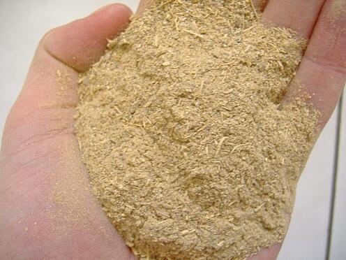 ground kava root, Image courtesy of Wikimedia Common and Ib0ga