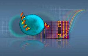 stemcells 2009 71 i2