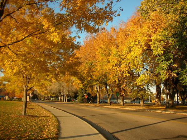 800px Autumn on CSU campus, Ft Collins resized 600