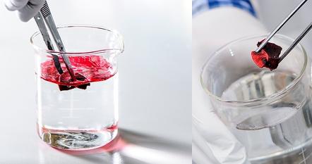 bioresearch lab