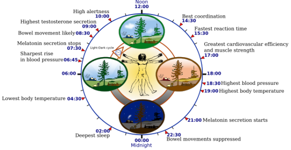 Biological clock research resized 600