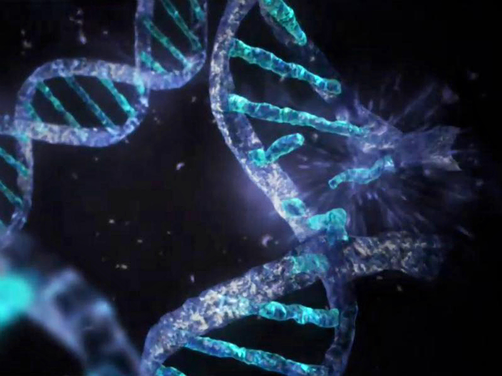 human dna research