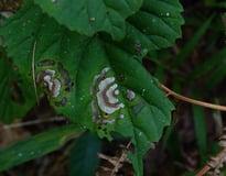 Fungus growing on a leaf.