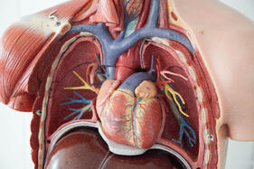 science solutions to cardiovascular issues
