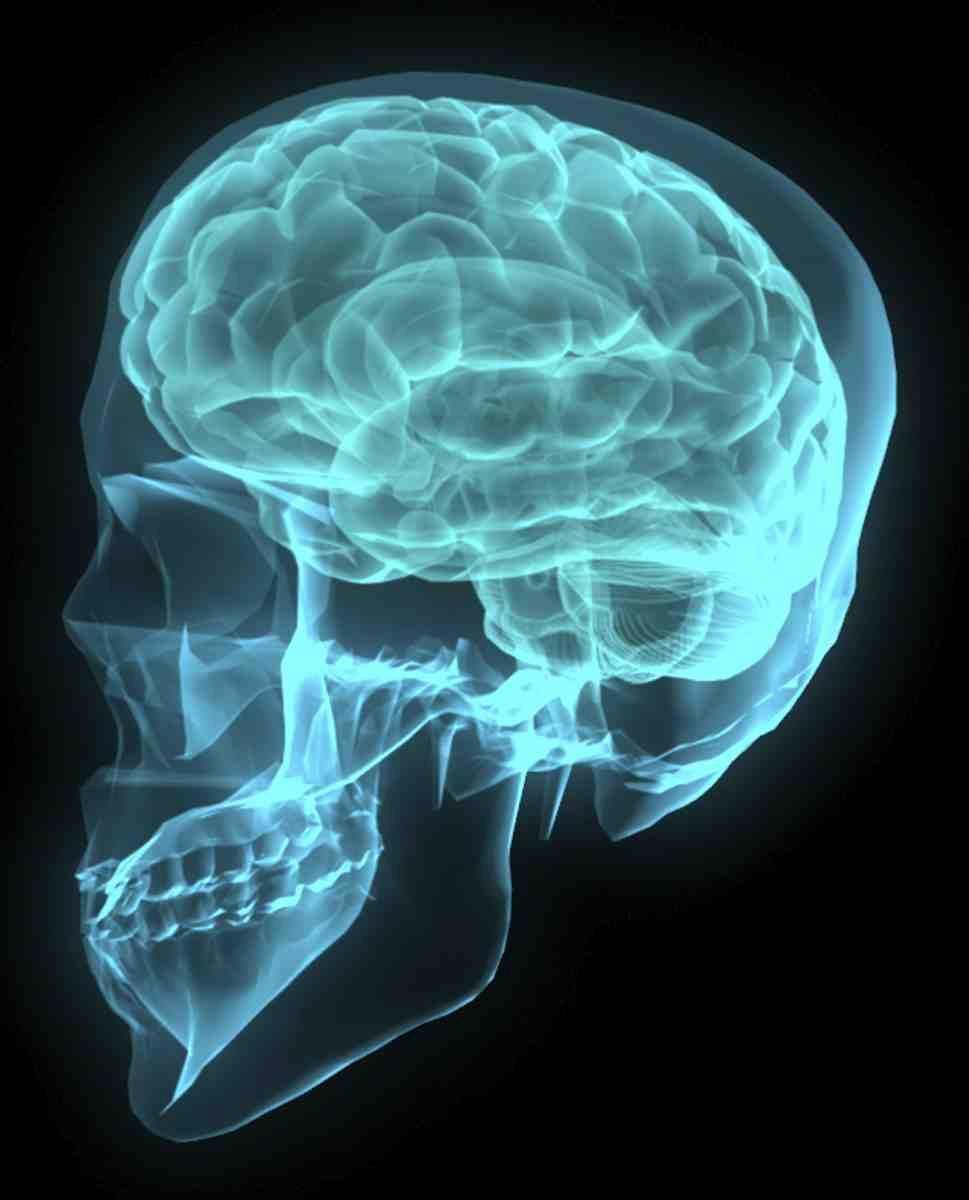 brain2_neuroscience_research