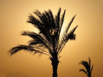 golden-palm-1399000