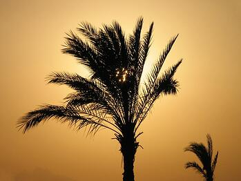golden-palm-1399000