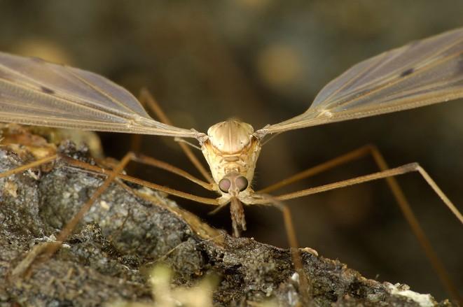 mosquito, Oregon Health and Science University, bioresearch