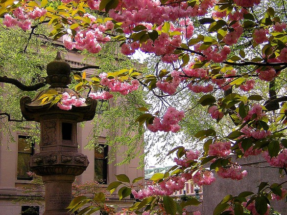 pink-afternoon-at-columbia-uni-1494649