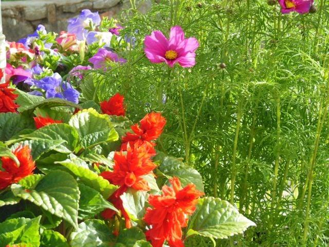 Beautiful-garden-plants