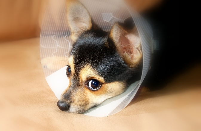 puppy-recovery-2-1388462